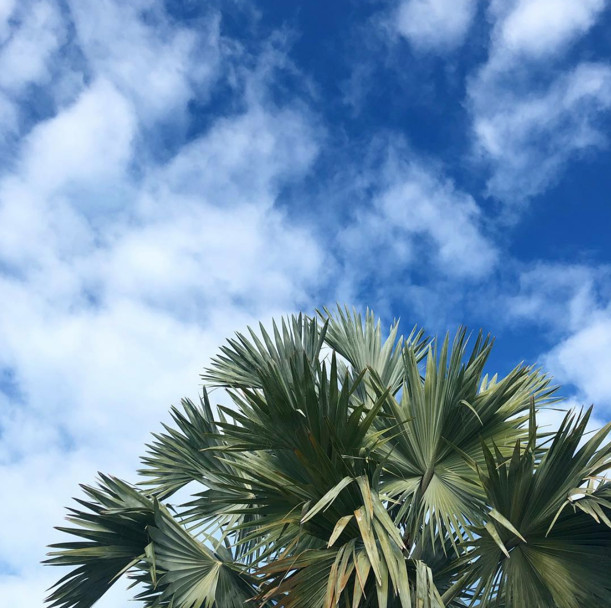 •palm tree paradise •