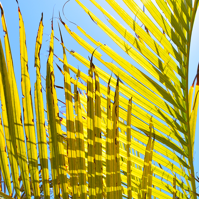 • palm tree paradise •