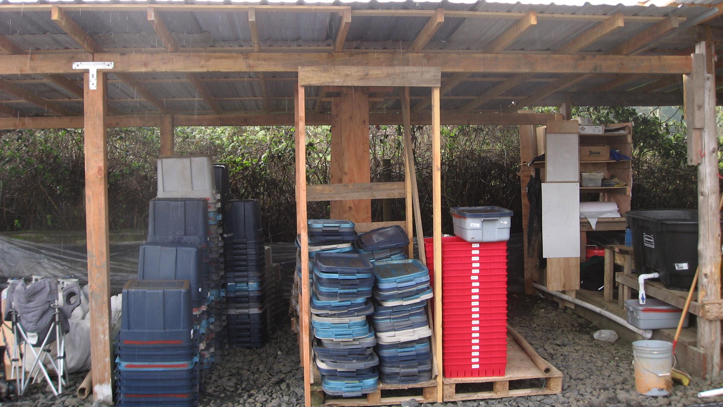 Wash-shed bin storage
