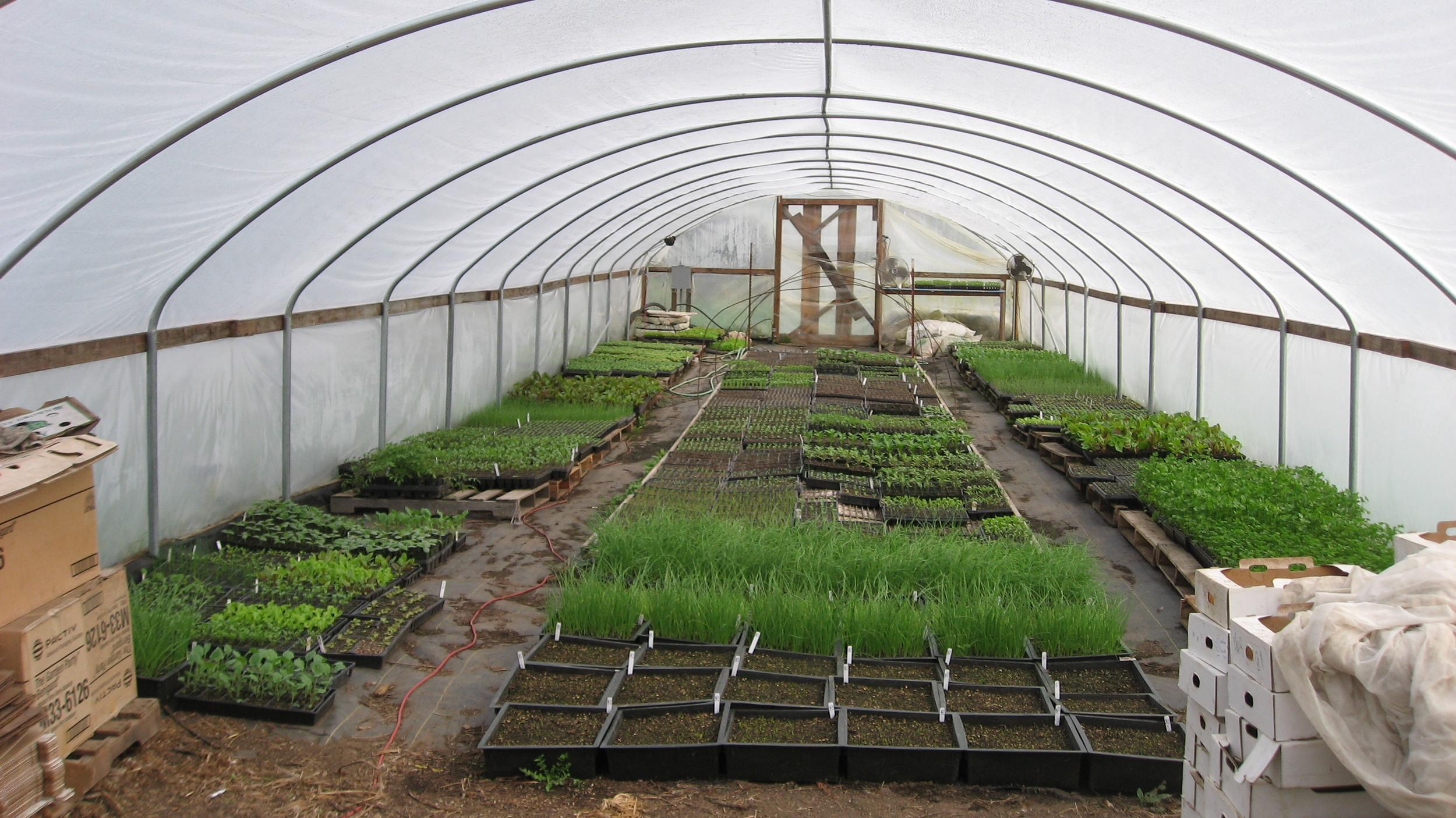 Lost Creek seedling hoophouse