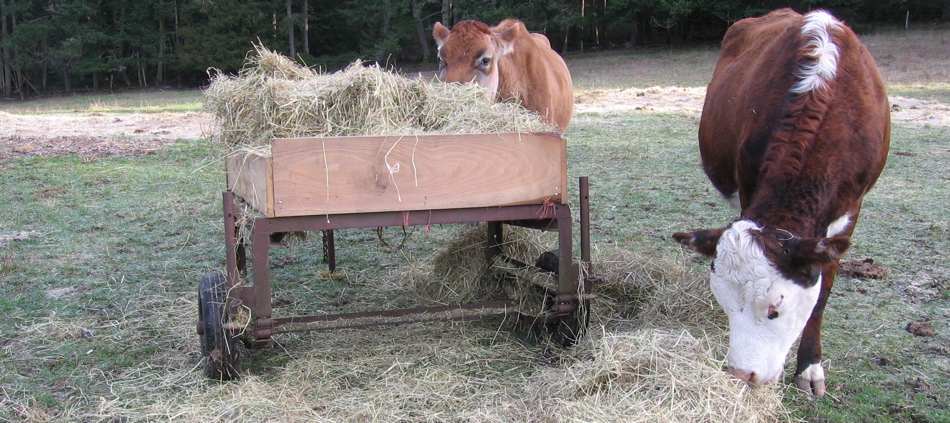Susan Nelson's Hay Tractor