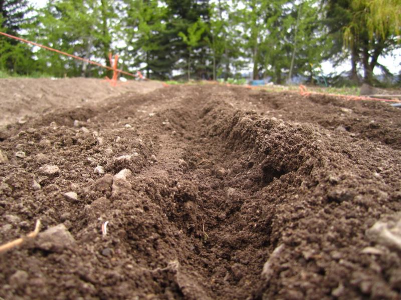 soil trench