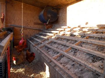 Inside View Castor River Chicken Coop