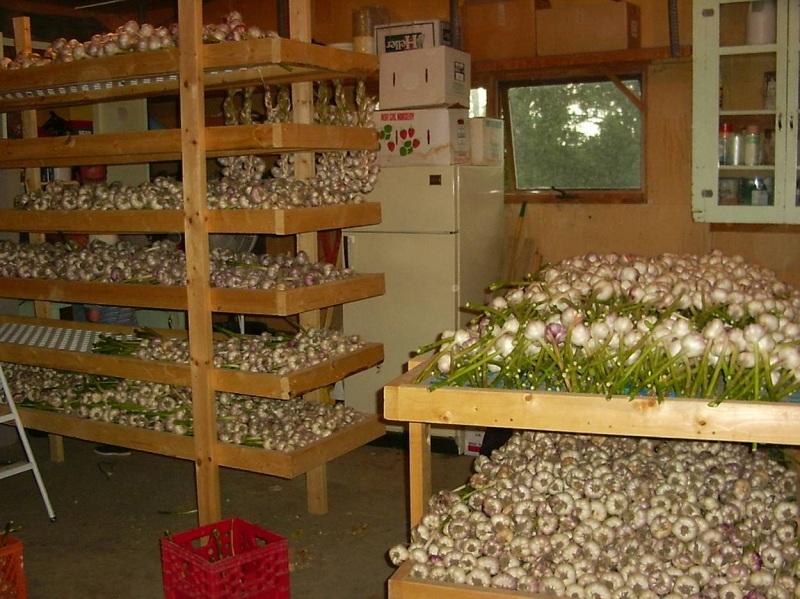 Garlic Stands