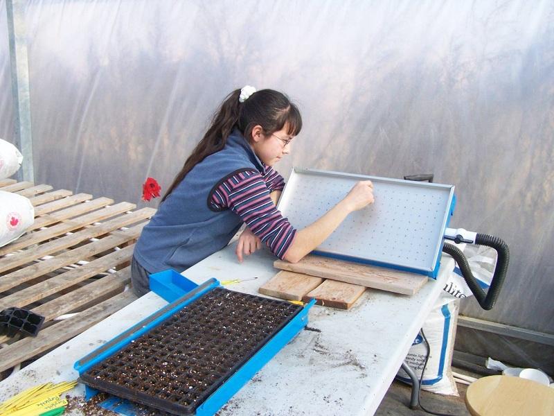 Air Seeding Onions