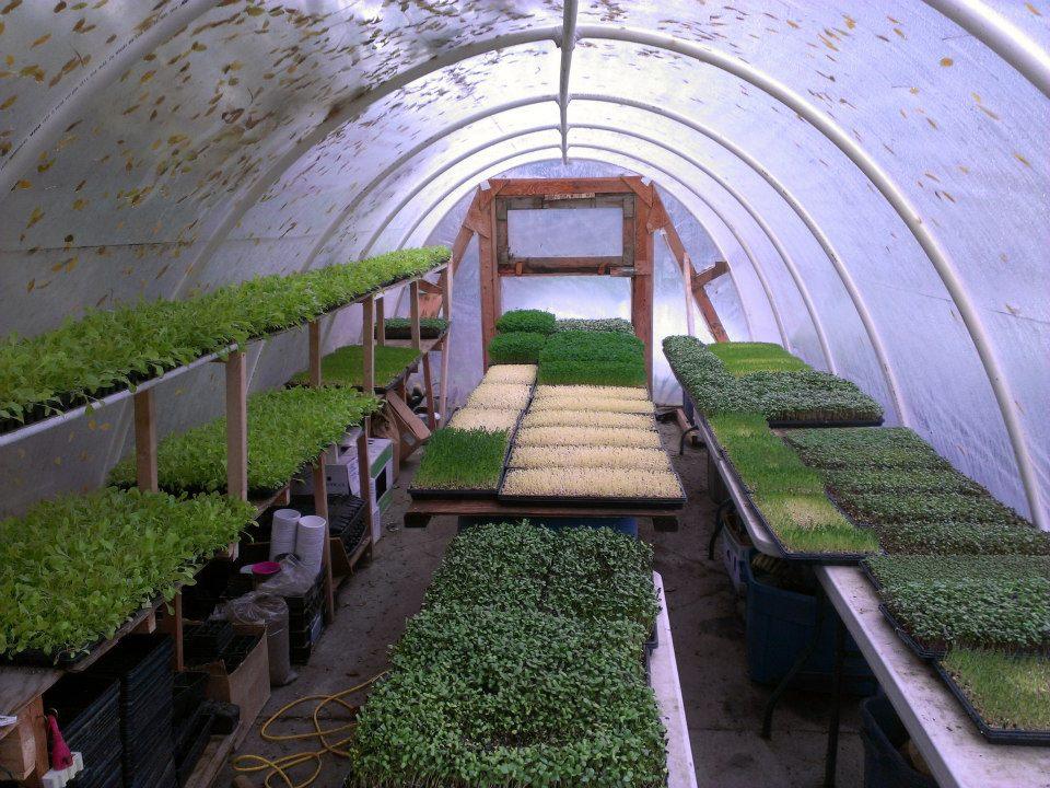 green city acres 4