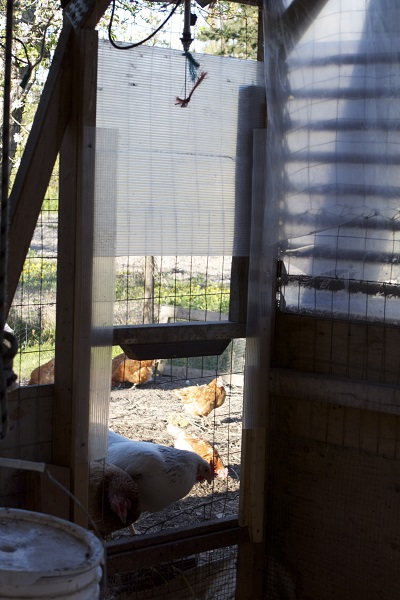 The result?  An automatic chicken door that we can adjust according to daylight.