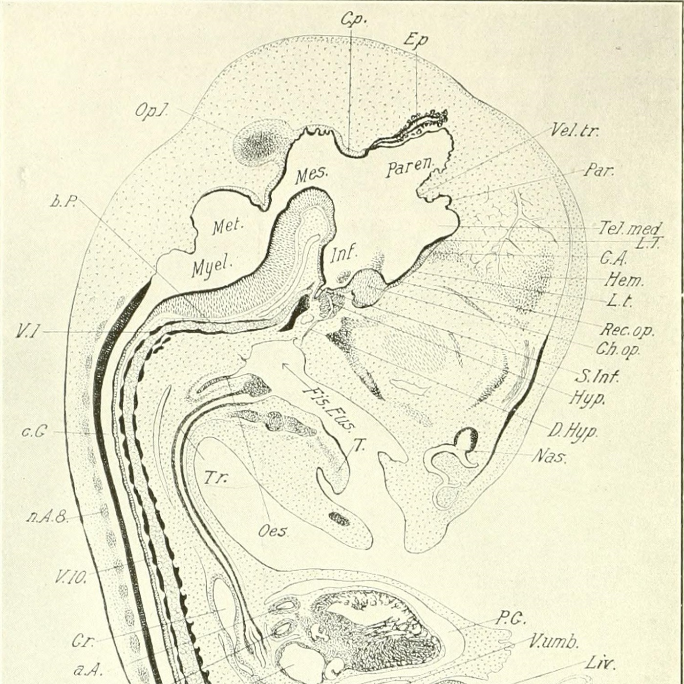 The_development_of_the_chick;_an_introduction_to_embryology_(1908)_(14725950606).jpg