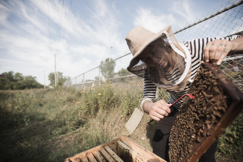 Les abeilles des possibles