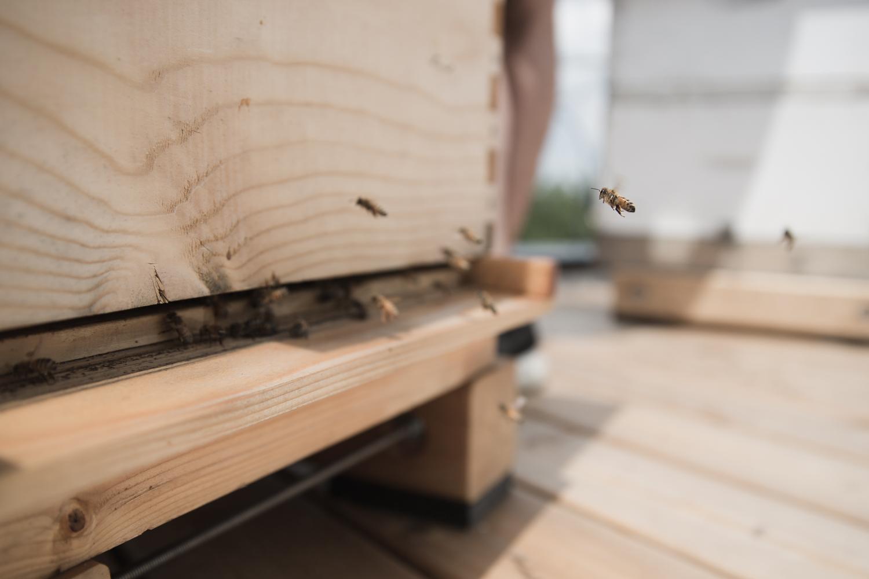 C'est par ici, la base de la ruche, qu'entent et sortent les abeilles