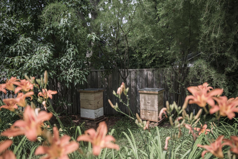 Les ruches se trouvent parfois dans la cour arrière des résidants, quand l'espace le permet.