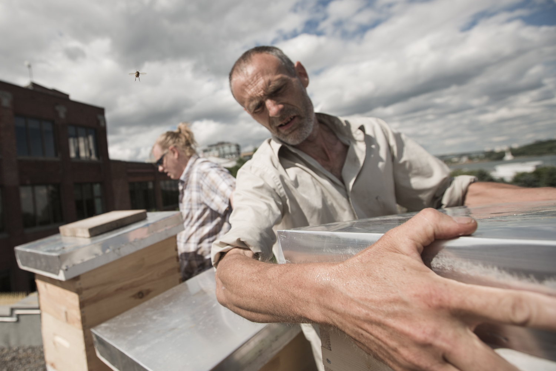 Un usager de l'Accueil Bono referme la ruche, suite à l'inspection.