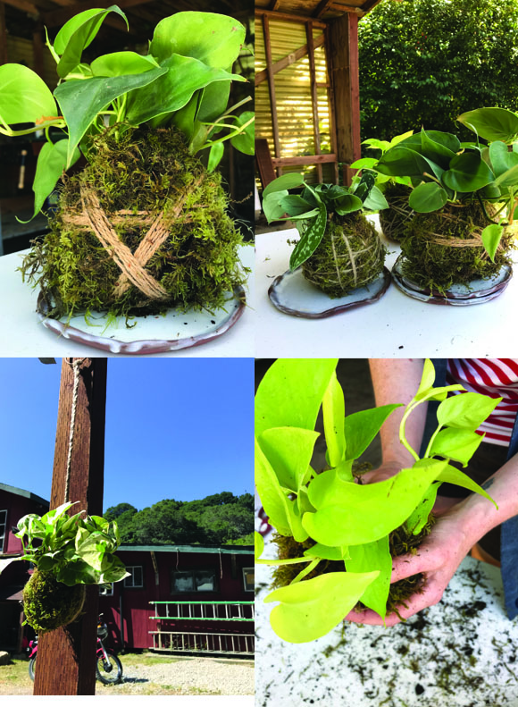 Kokedama can be made to hang, to sit, or can be attached to wood or objects…