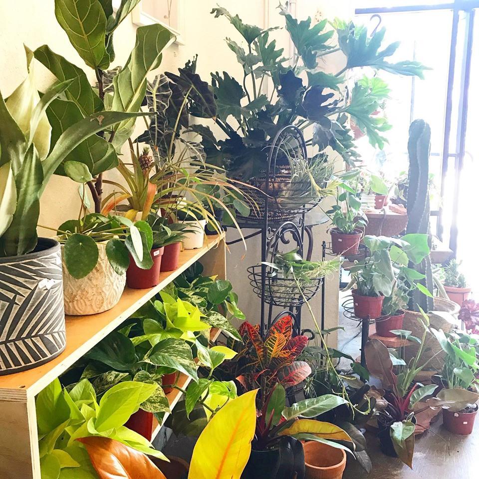 planties.jpg