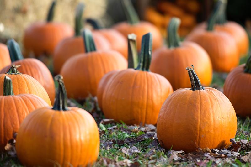 pumpk.jpg