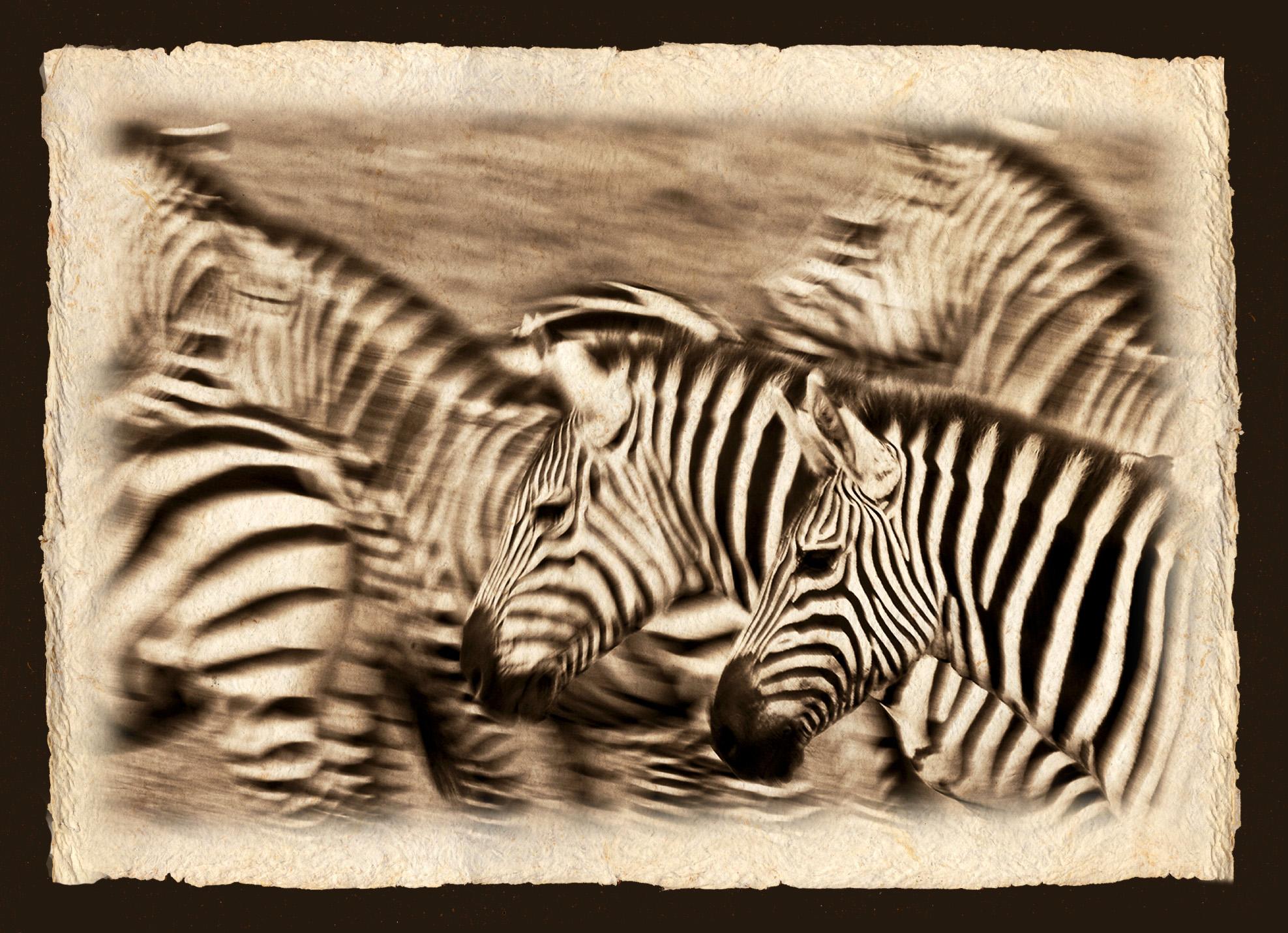 A DAZZLE OF ZEBRA.jpg