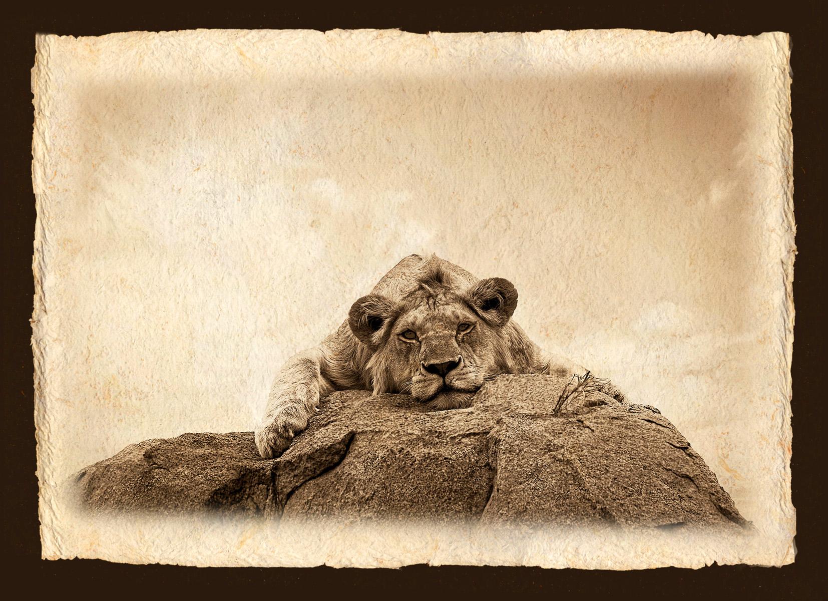 LION ON ROCK.jpg