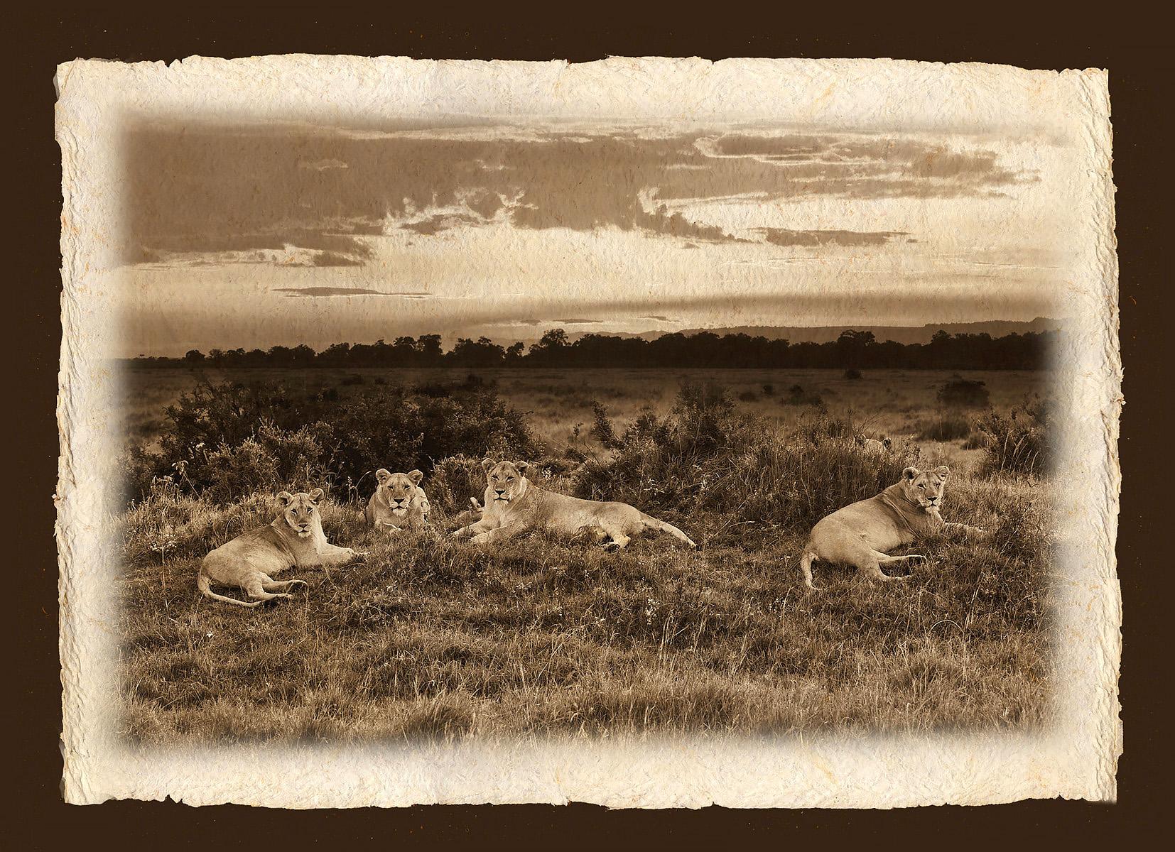 LIONS AT SUNSET.jpg