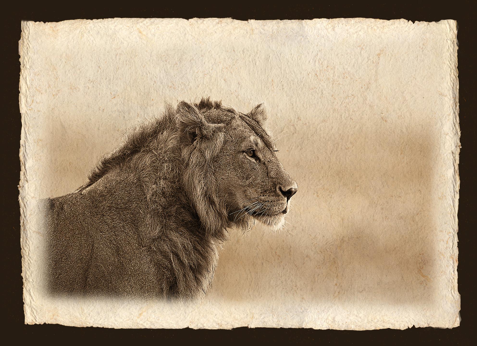 PORTRAIT OF LION.jpg