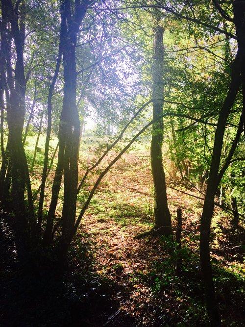 FAQ+forest+sun.jpg