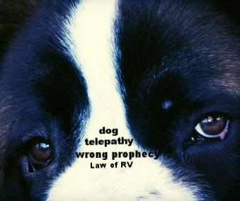 my-dog-1369512-640x480.jpg