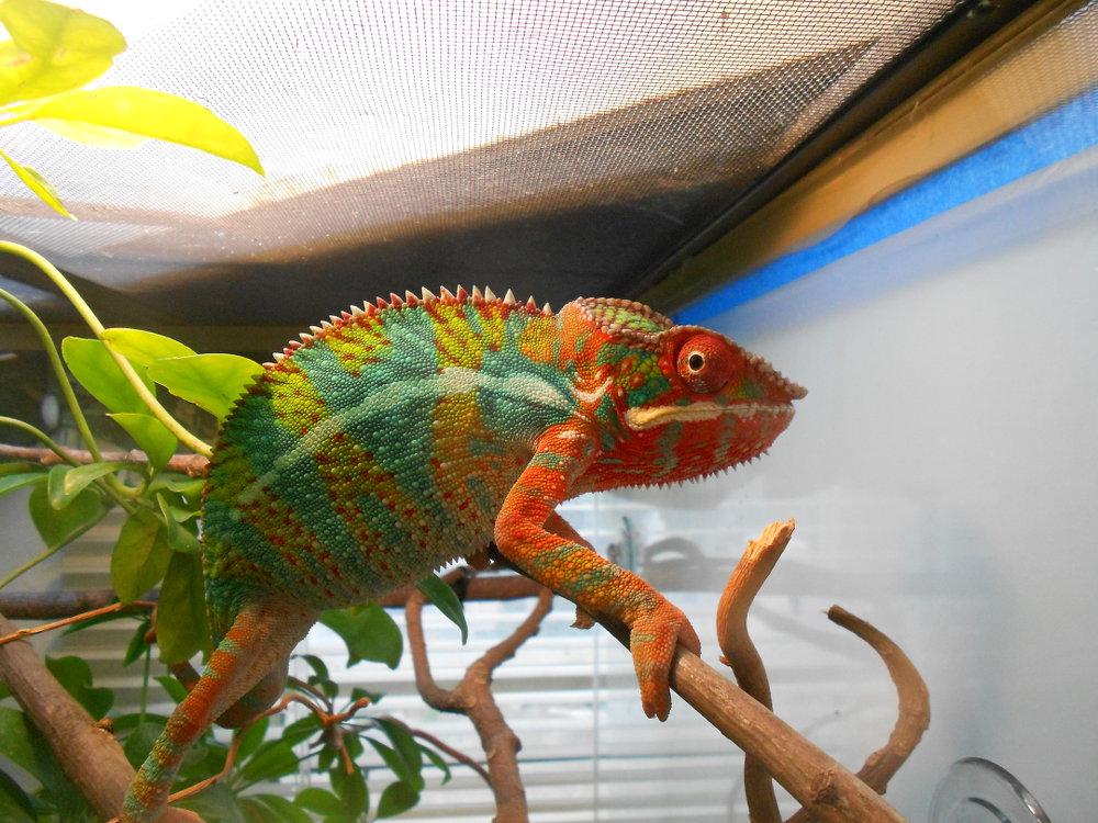 Mr. Rainbow (Ambilobe)