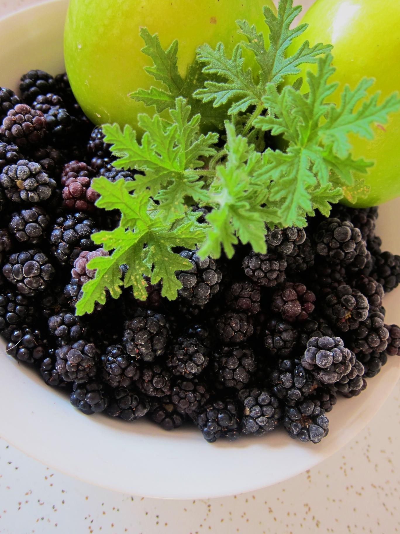 blackberry_04.jpg