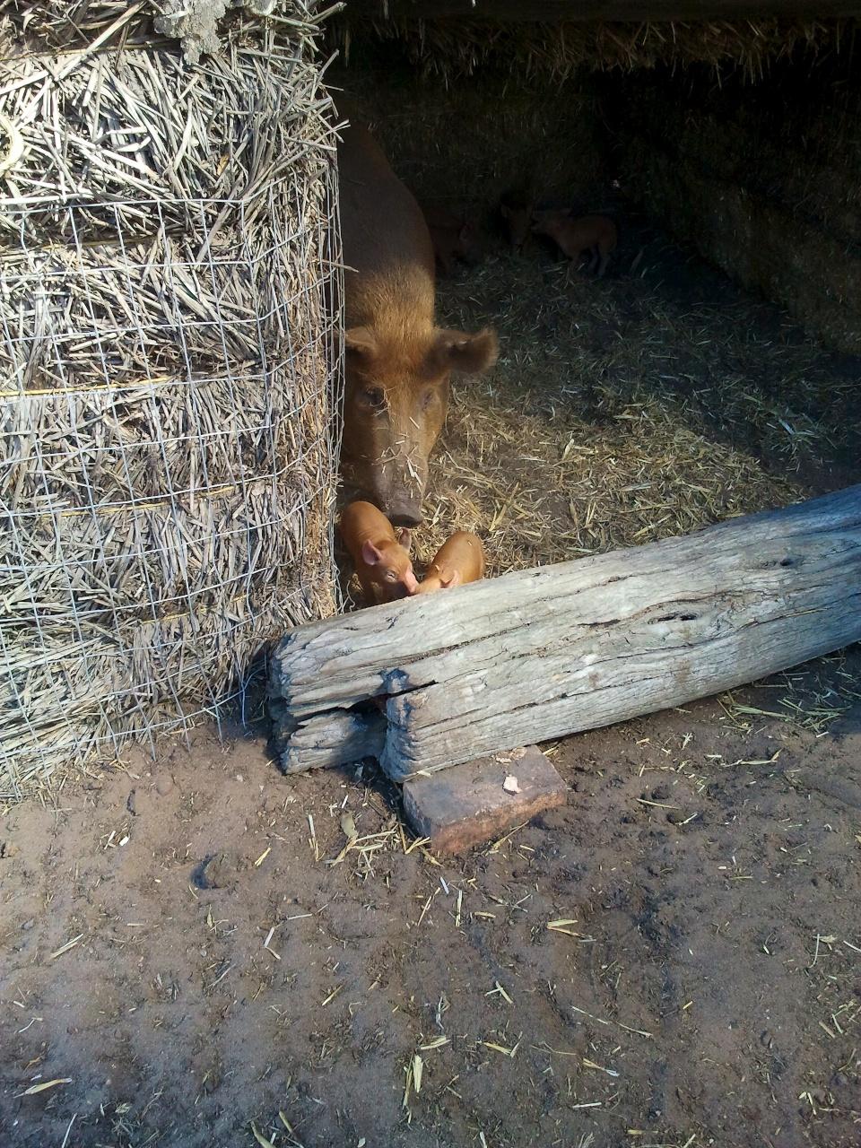 2012-03-24EHart_TPB_blog02.jpg