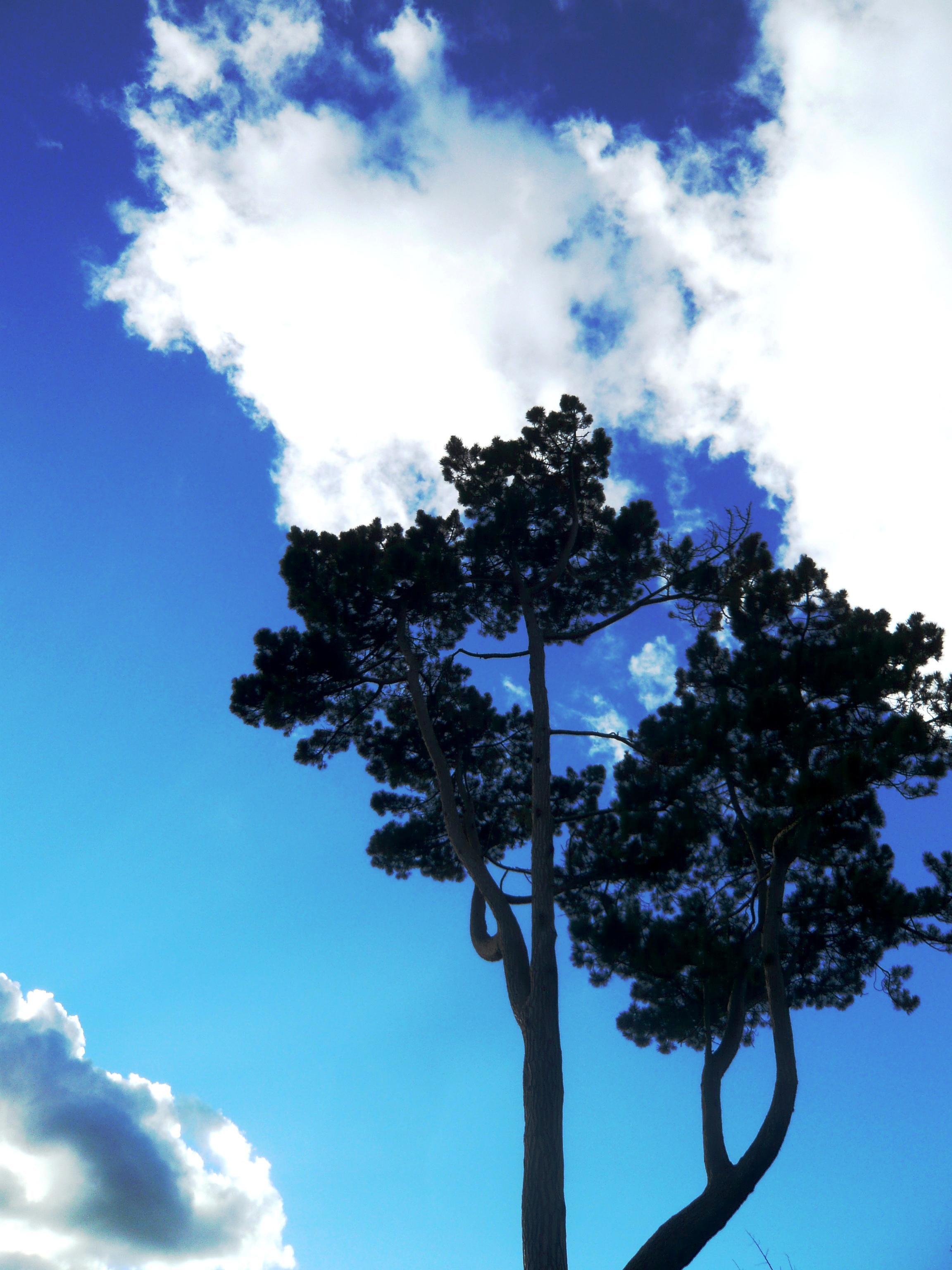 nature sk kayss (19).JPG