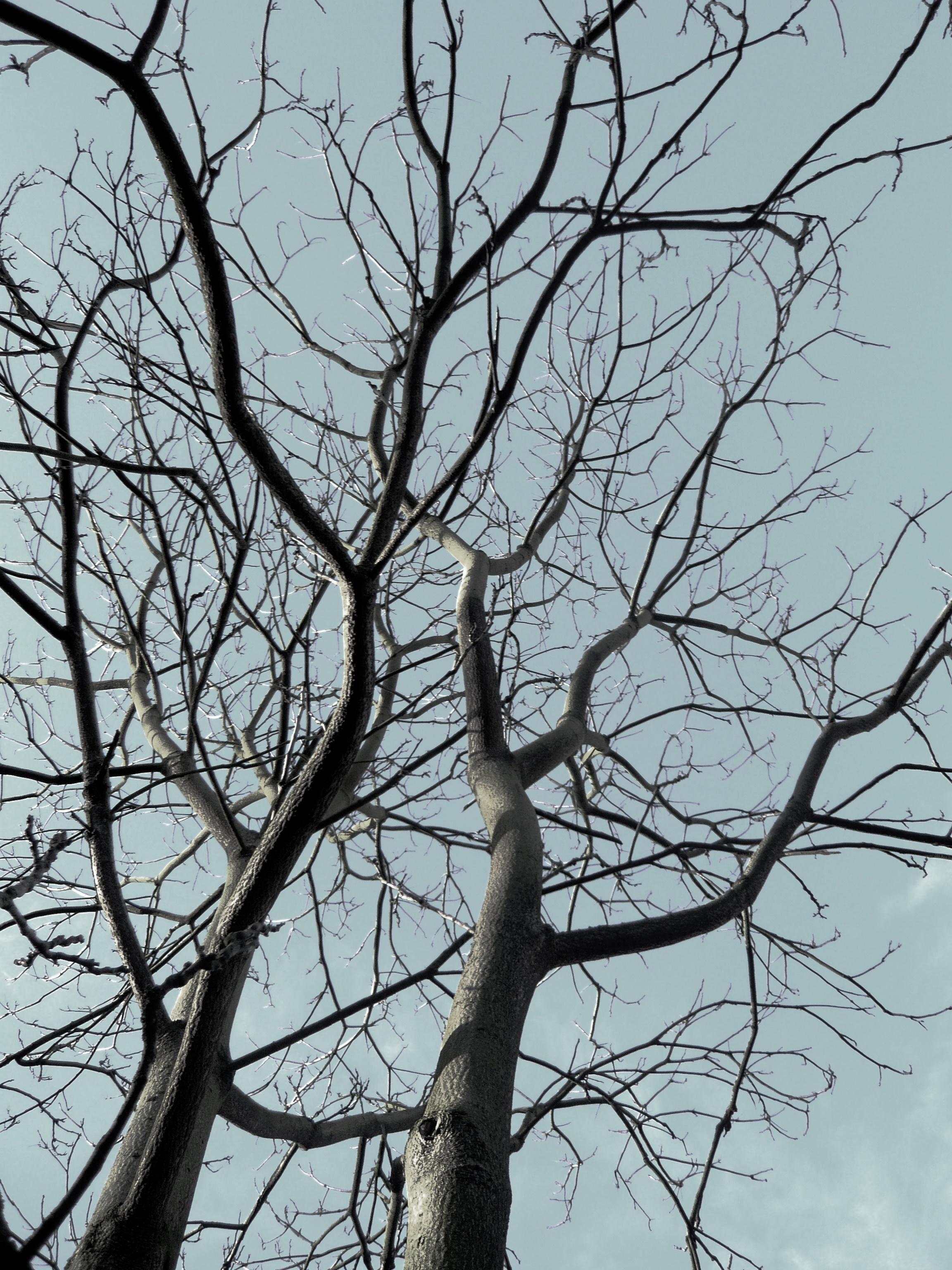 nature (1).JPG