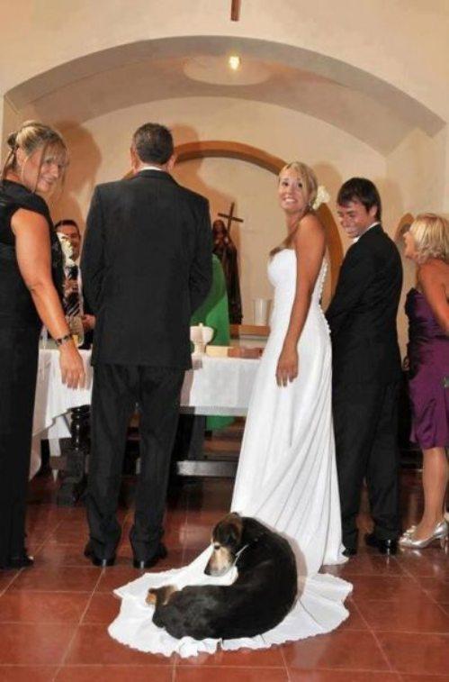 wonderful-weddings-funny-17.jpg