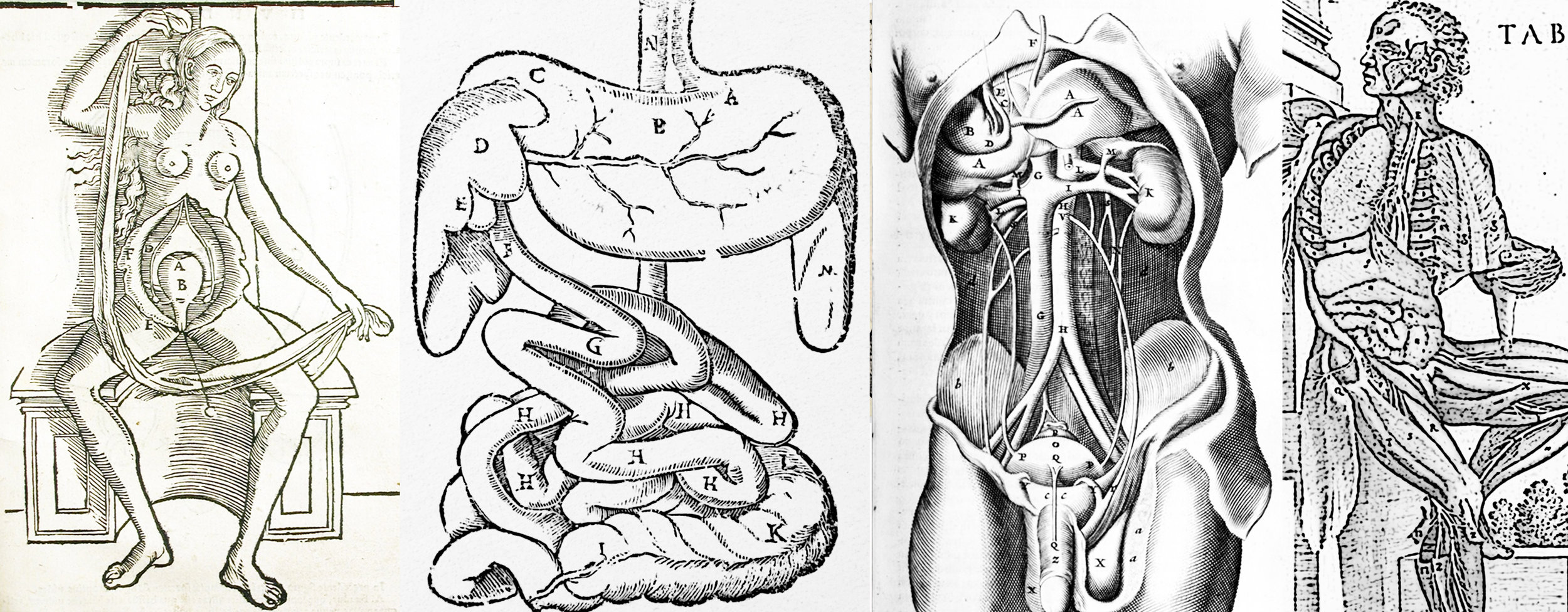 7 BLOG internal organs3.jpg