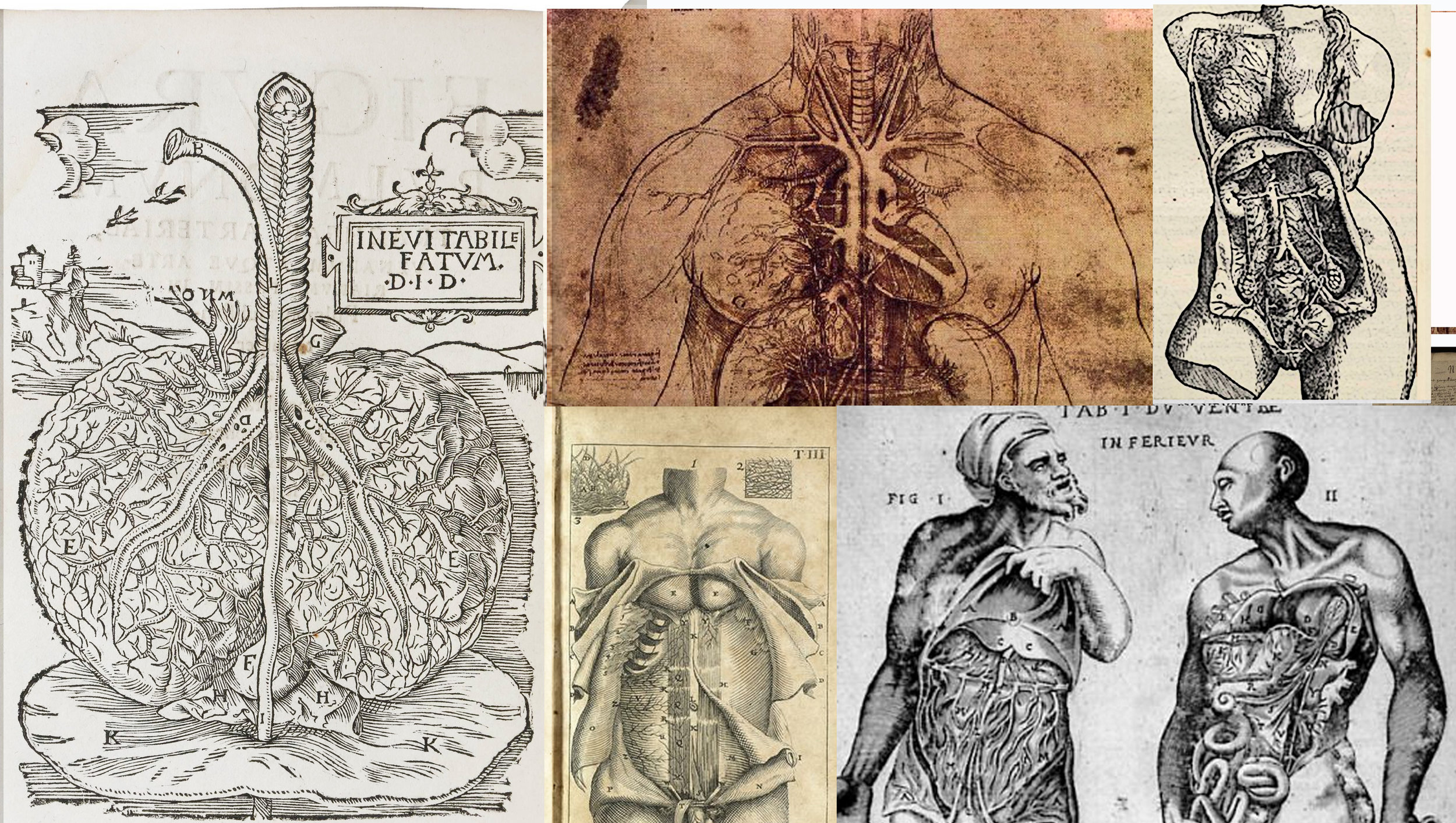 6 BLOG internal organs.jpg