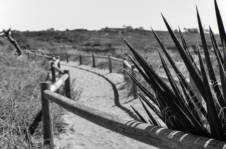 Yucca Trail.jpg