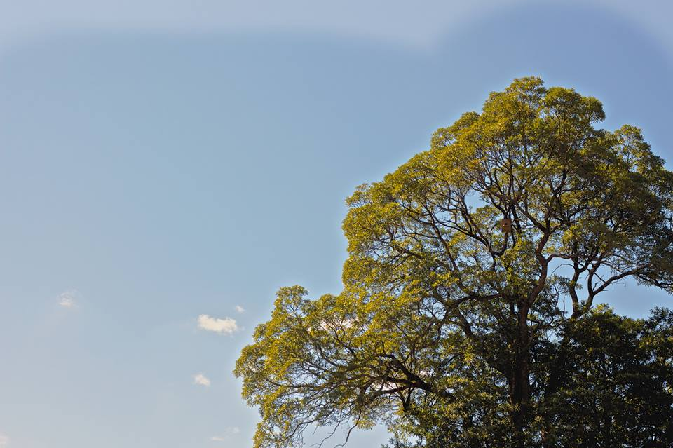 Can you post the box? It's placed around 35m up in a beautiful Matumi tree.