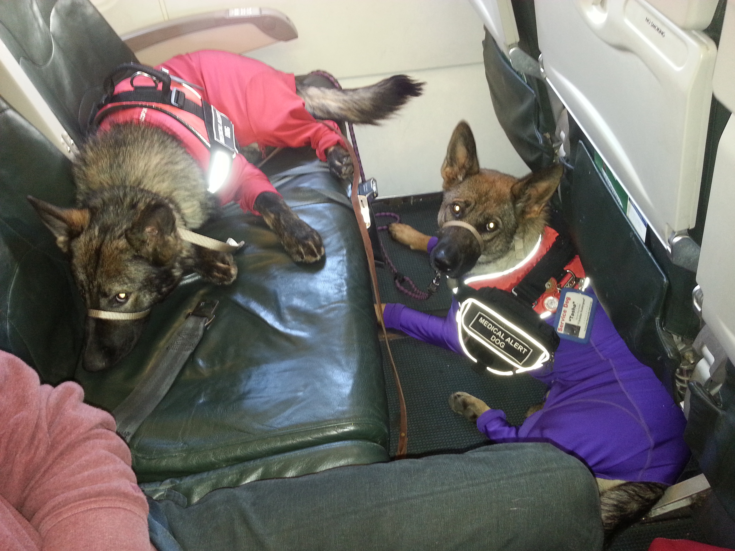 Oops, the dogs were suppose to be in different rows. The pups are patiently waiting while the new seats are found.