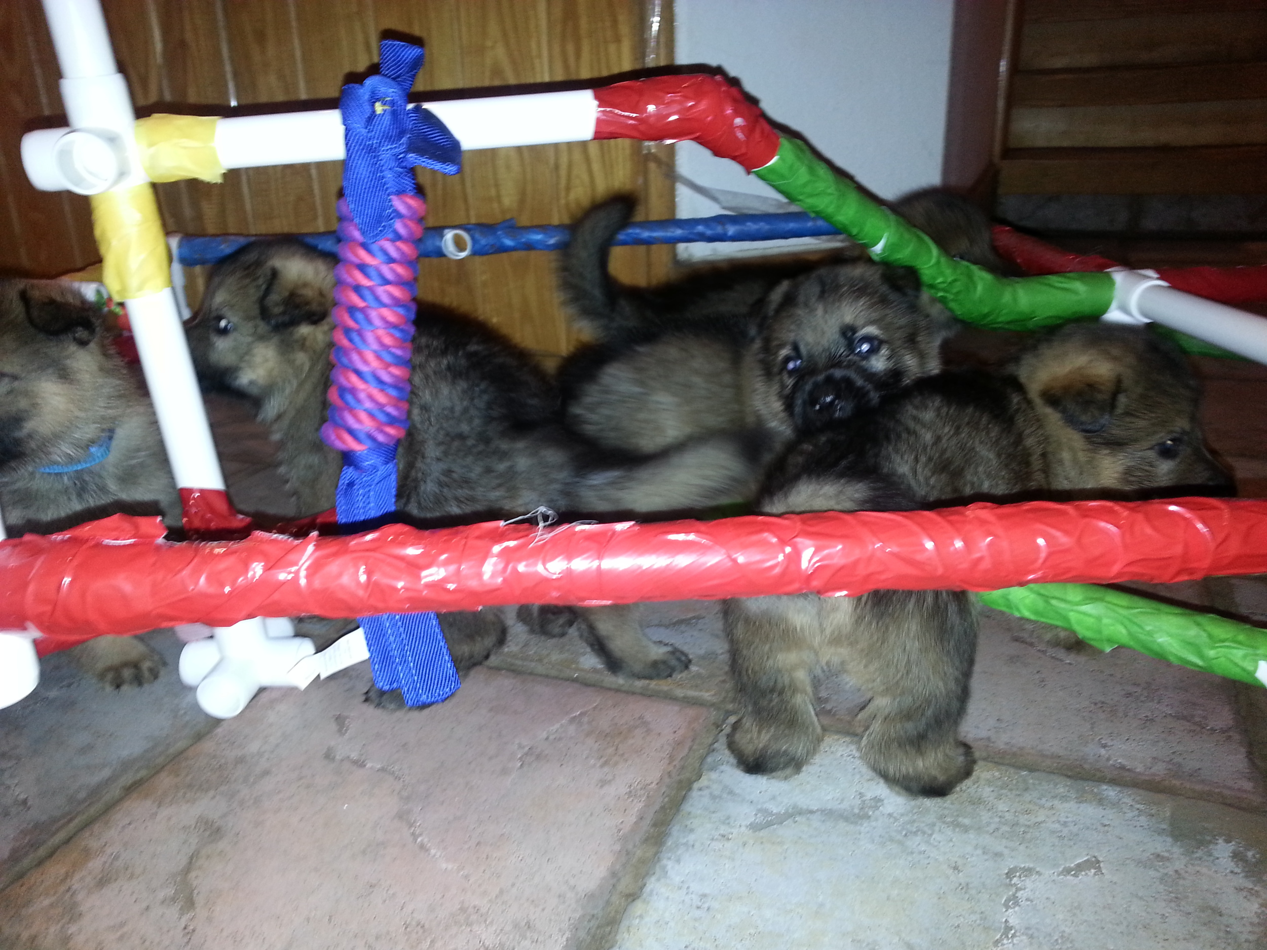 Playing in the puppy gym.