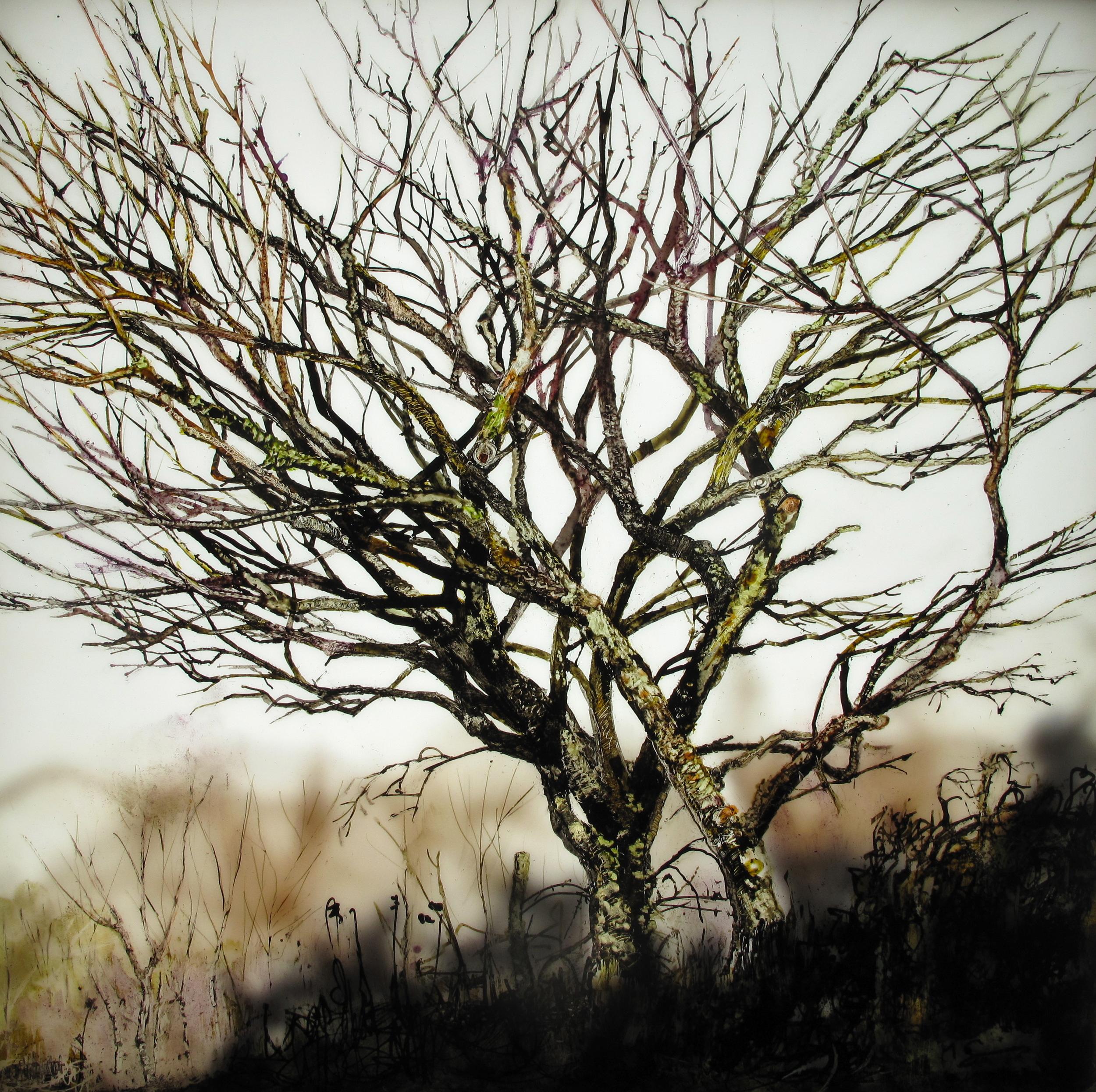 """Mossy Tree"""