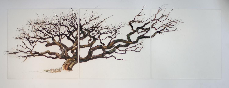 """Gnarled Tree"""