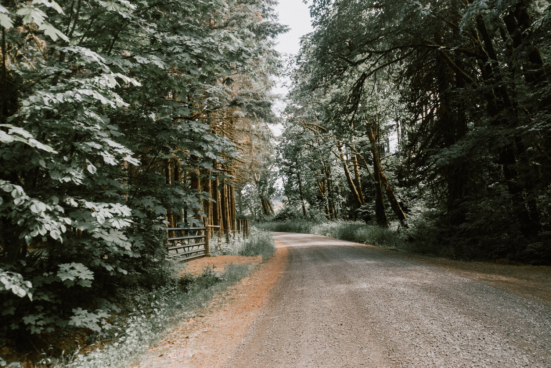 the+road+home.jpeg