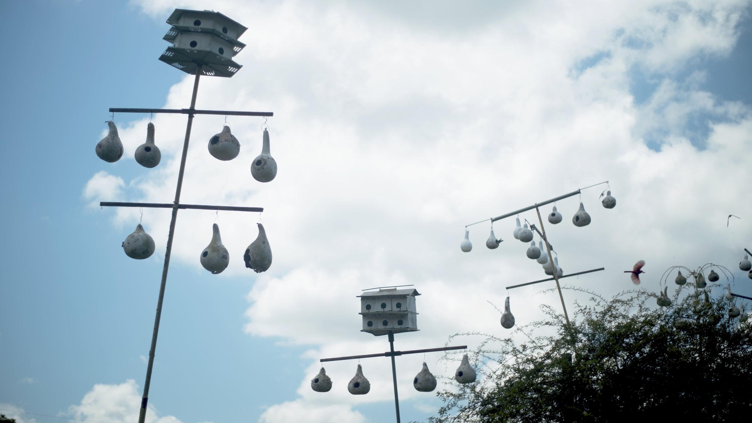 Bird Feeders 2.jpg