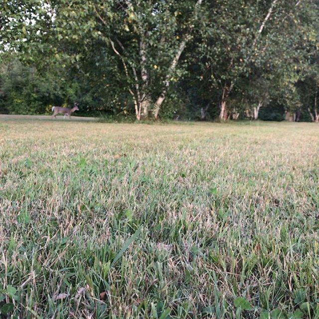 Dusk activity at park #detroitwildlife #elizahowellpark