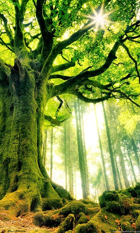 Story Tree.jpg
