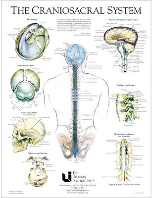 cranio poster.png
