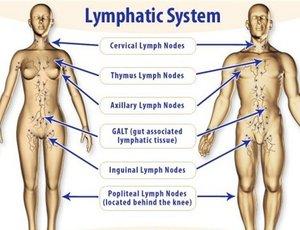 Lymphatic-System.jpg