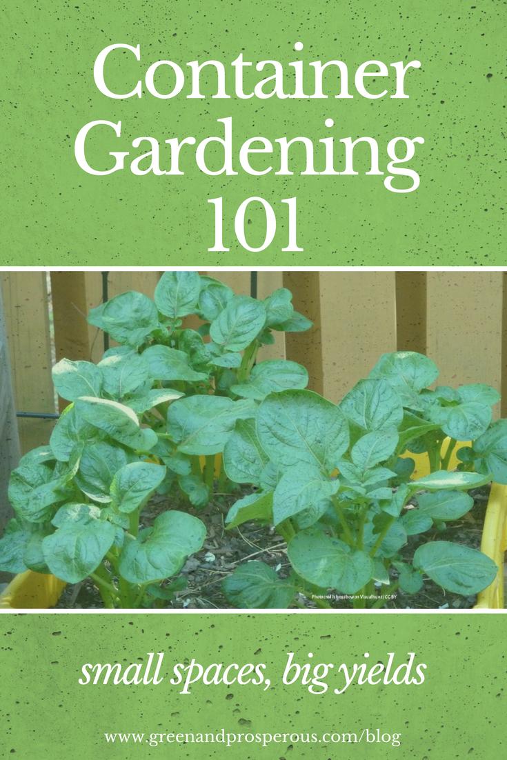 container gardening 101