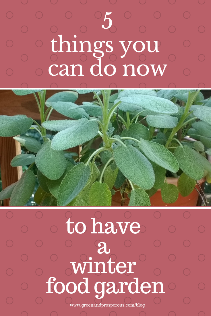 5 things for a winter food garden