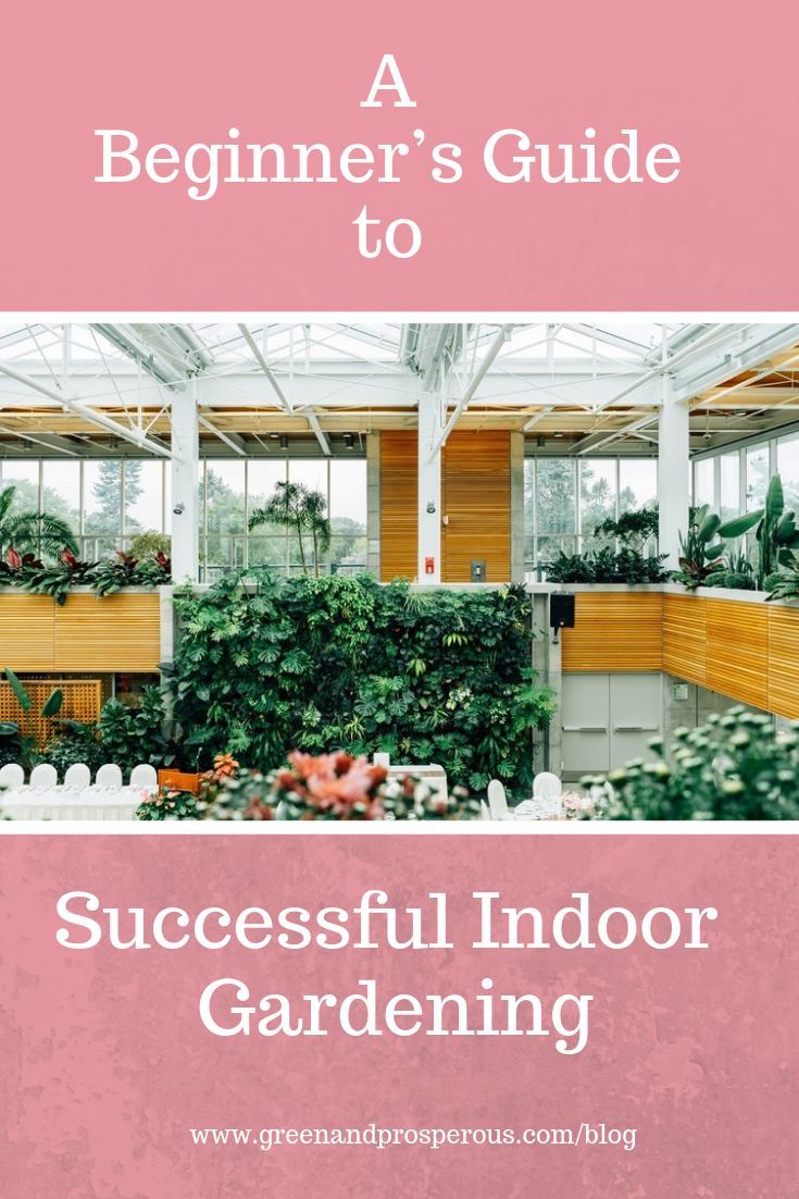 beginner's guide to Successful Indoor Gardening