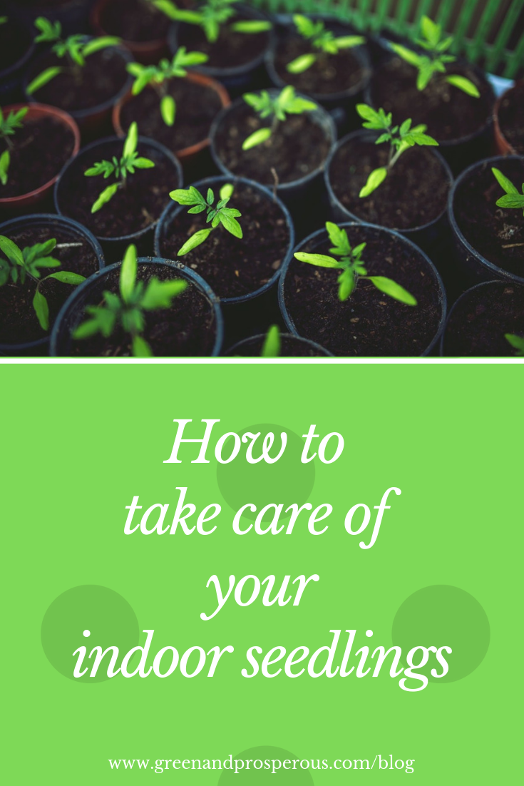 How to take care of your indoor seedlings.png