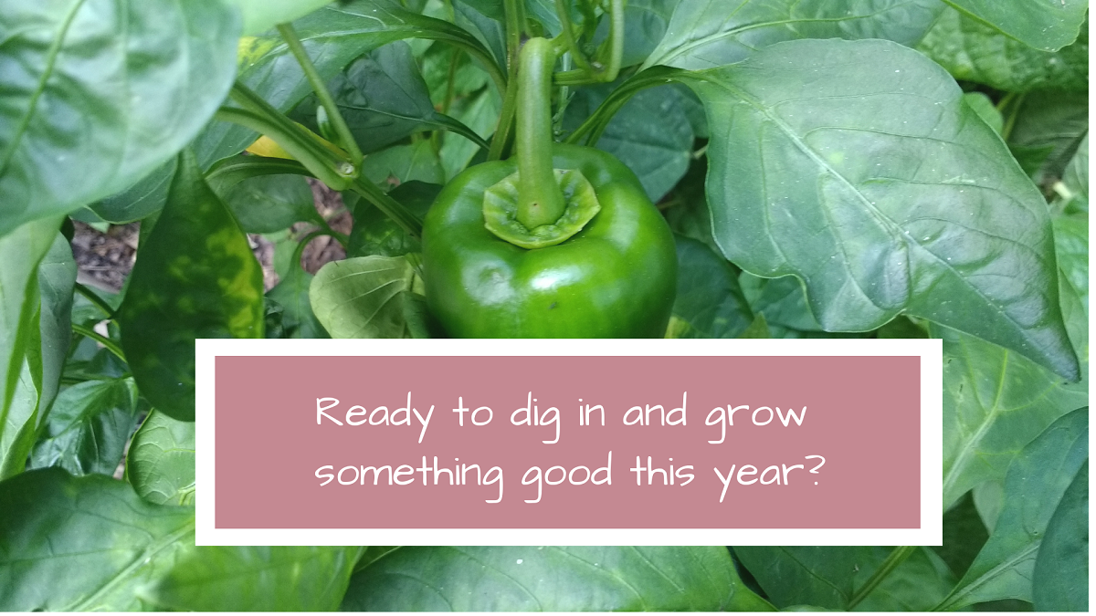 online gardening course Container Garden Like a Pro